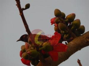 Spring.jpg1